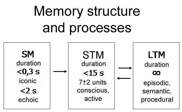 Short Term And Long Term Memory : Theoretical highlight memory department of